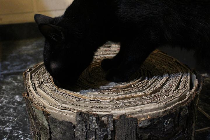 rasguñador-gato8